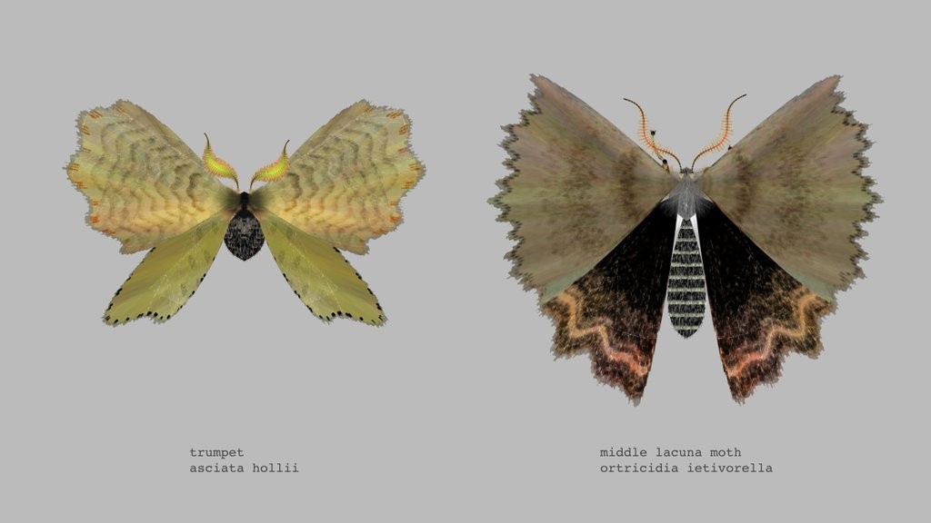 2 moths by @mothgenerator