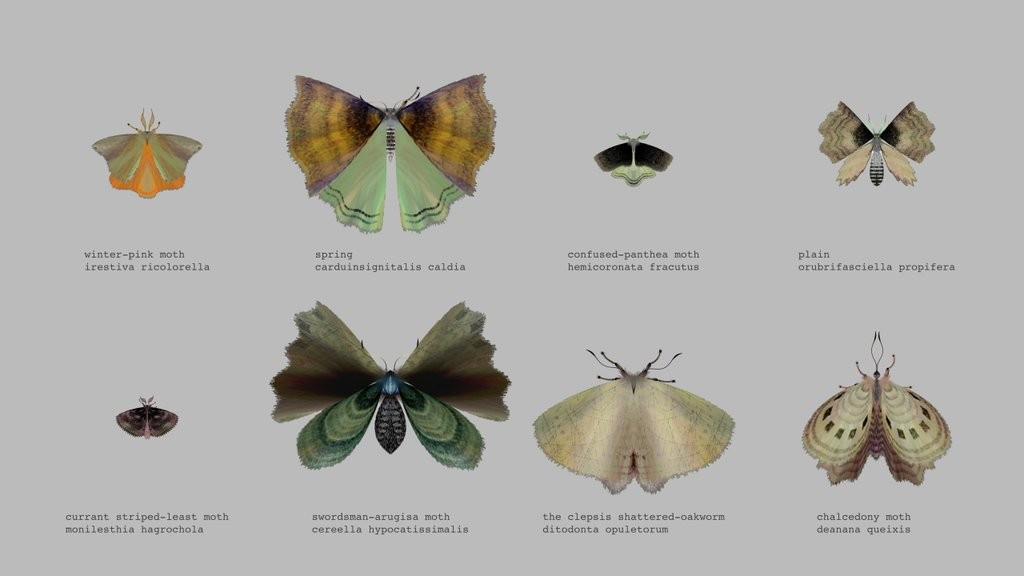 8 moths created by @mothgenerator