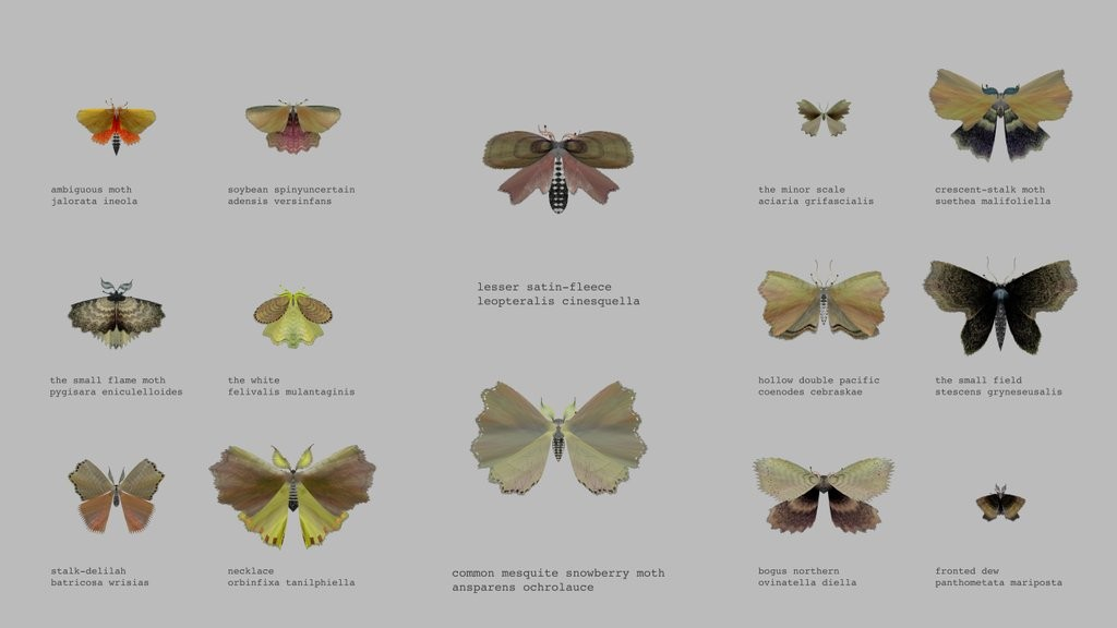 14 moths created by @mothgenerator